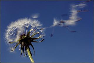 vento1