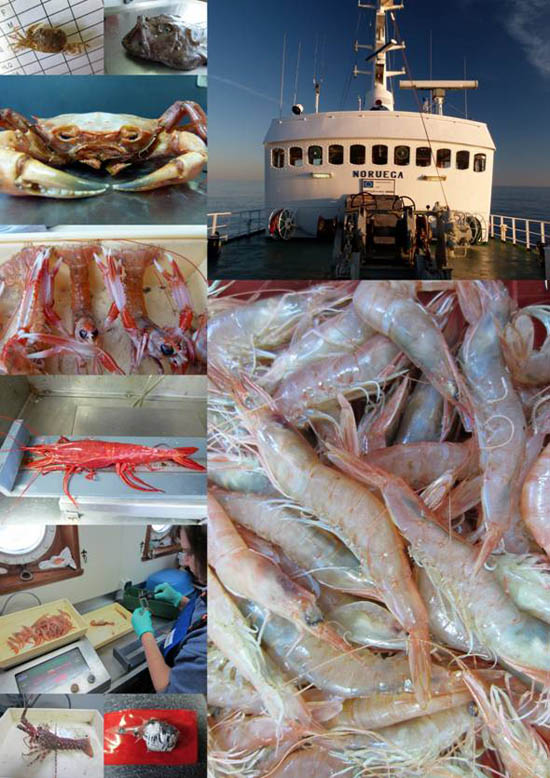 campanha-crustaceos-14