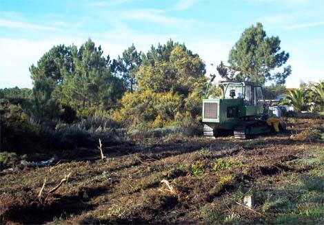 prevenção-dos-incêndios-florestais-1