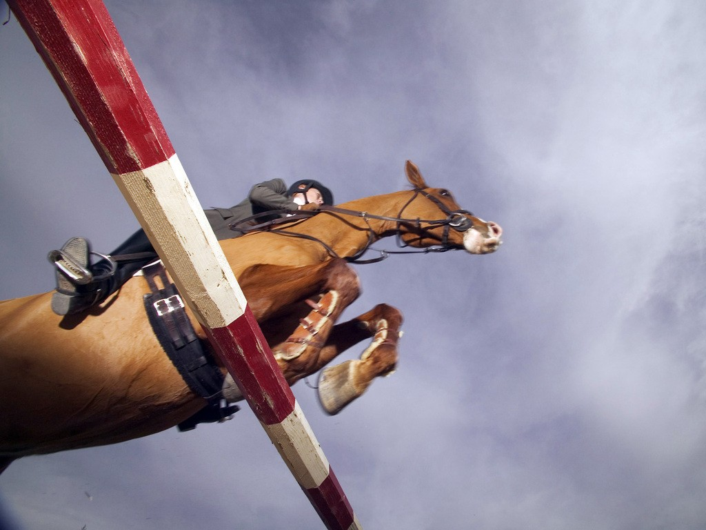 Horse and Rider Show Jumping