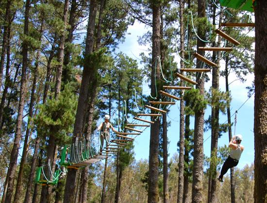 percursos arborismo