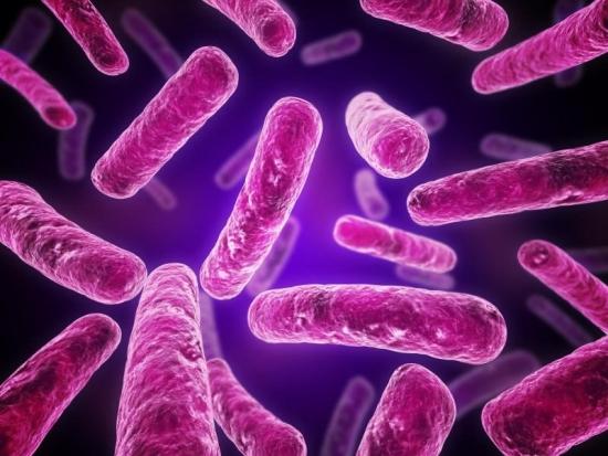 Bacilo de Koch_Tuberculose