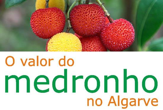 cartaz_seminario_medronho