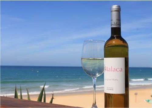 sauvignon blanc Malaca1
