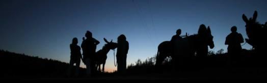 burros ao luar