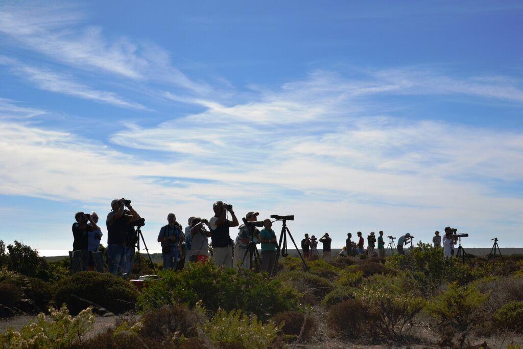 Birdwatchers, no Festival de Observação de Aves & Atividades de Natureza de Sagres - Foto: Nuno Barros