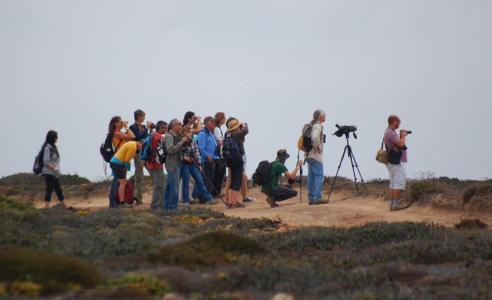 Festival de Observação de Aves Sagres - Foto de Elisabete Rodrigues|Sul Informação