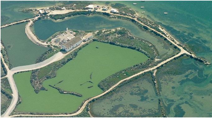 Estação experimental do Ramalhete (Ria Formosa – Faro)
