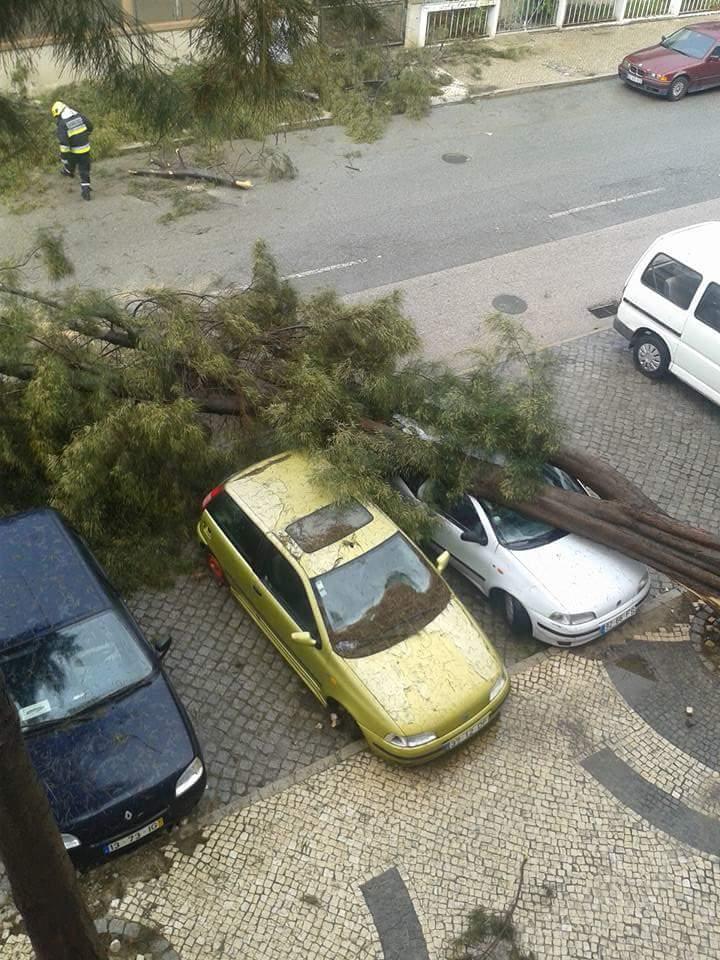 Árvore caiu em cima de carros em Olhão - foto de Ana Vanessa