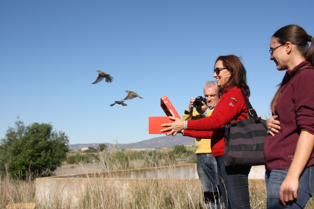 Devolvendo passarinhos à liberdade na Natureza