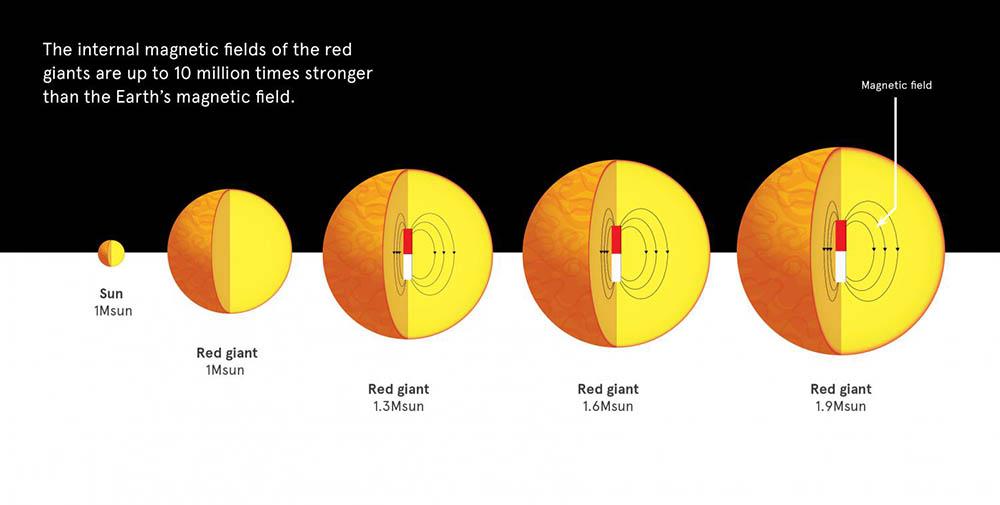 figura 1 - Estrelas gigantes vermelhas a partir de 1,3 massas solares têm fortes campos magnéticos