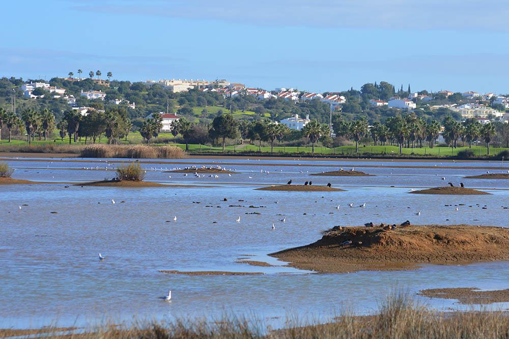 Biodiversidade na Lagoa dos Salgados
