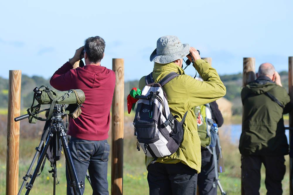 Birdwatching na Lagoa dos Salgados_2
