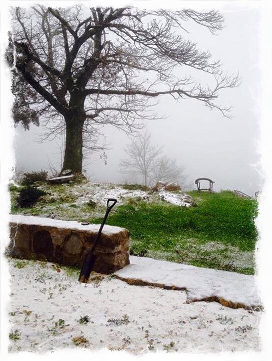 Neve na Serra de Monchique, esta manhã, em foto de Margarida D. , partilhada por Rui André na sua página de facebook