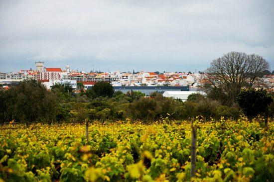 Lagoa Cidade do Vinho
