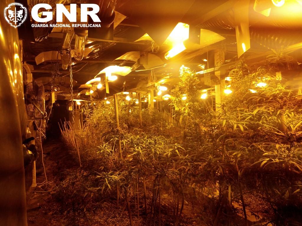 GNR Faro - Apreensão