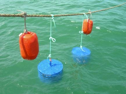 aquacultura offshore