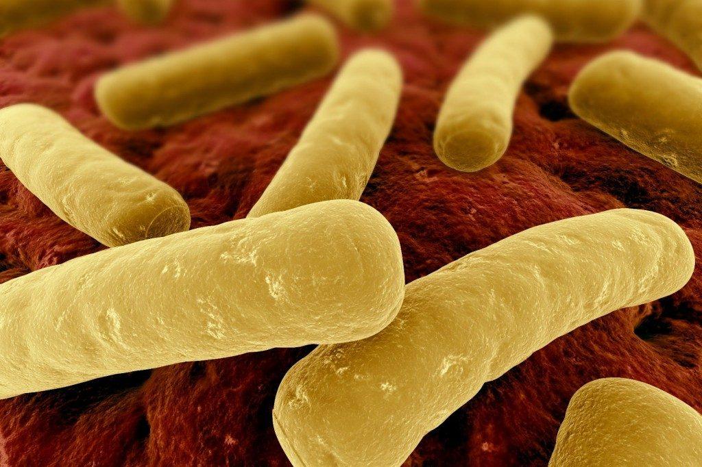 Clostridium-Difficile-1024x682