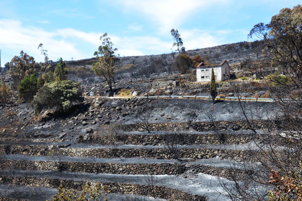 Serra de Monchique_após incêndio_er_14