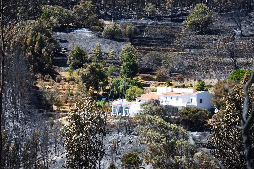 Serra de Monchique_após incêndio_er_21