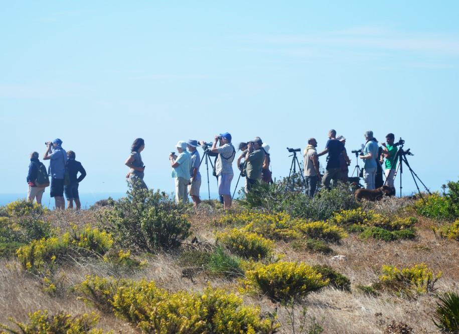 A observar as aves na Cabranosa