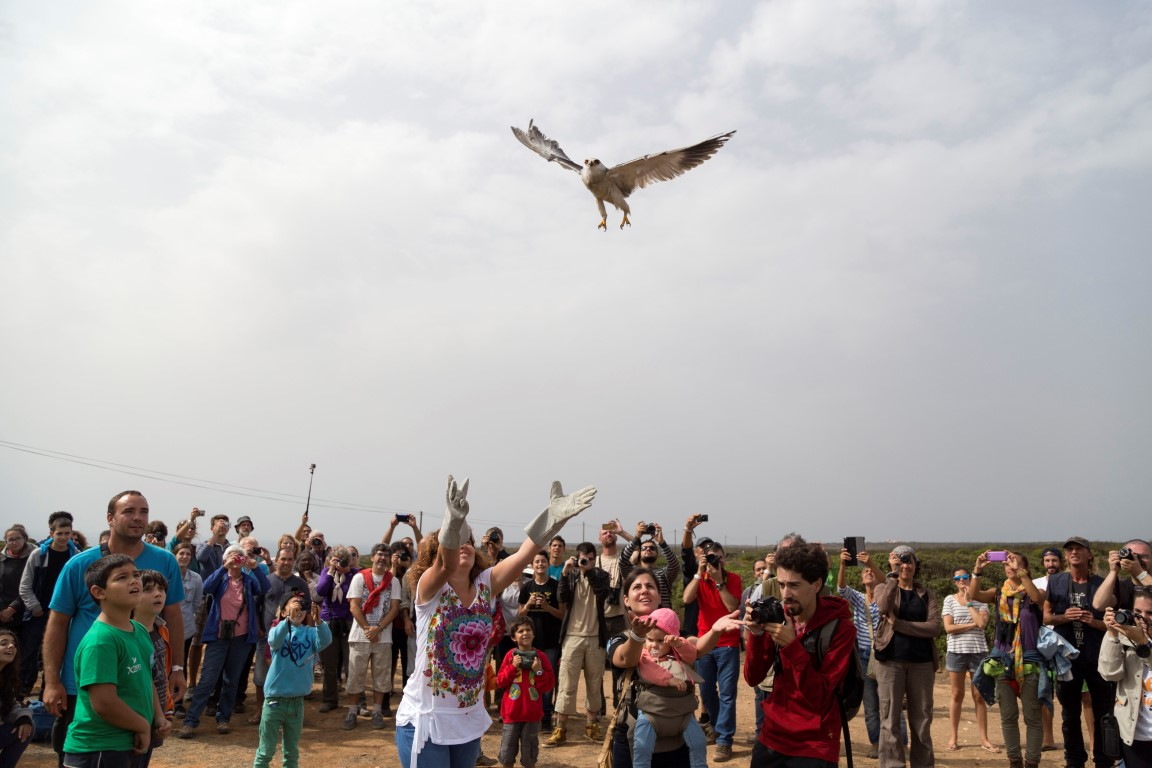 festival observação aves