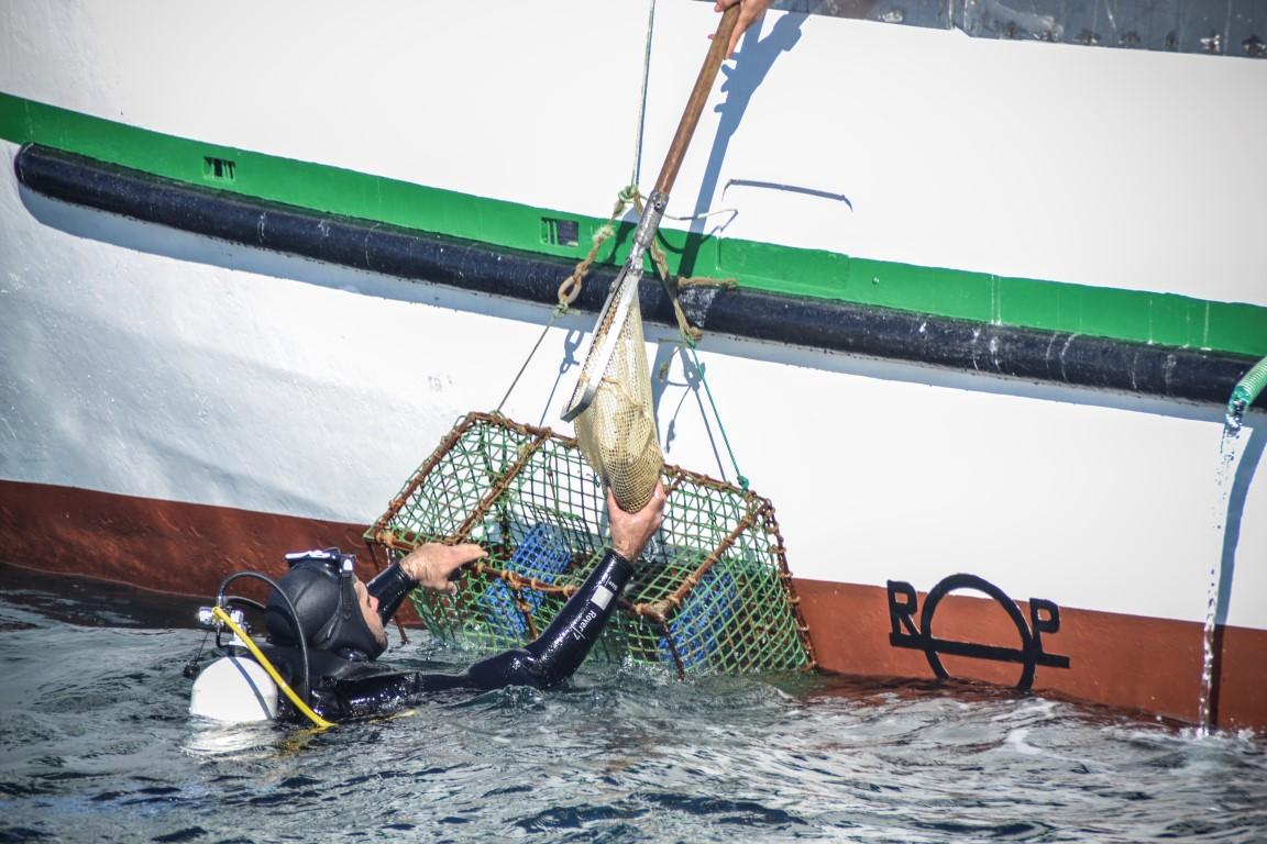 Mergulhadores depositaram meros em pedras sugeridas pelos pescadores. Foto: Ruben Caeiro.