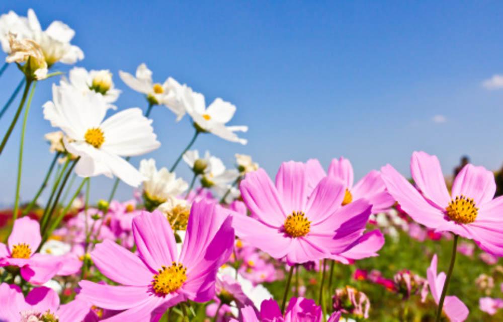 Capa Facebook Primavera-flores Primavera #2 Feminino Flores Imagens para Tumblr Natureza Paisagem  primavera imagem de capa foto de capa para facebook foto de capa facebook primavera capa facebook primavera capa facebook