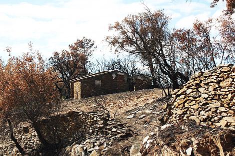Efeitos do Incêndio na Serra do Caldeirão