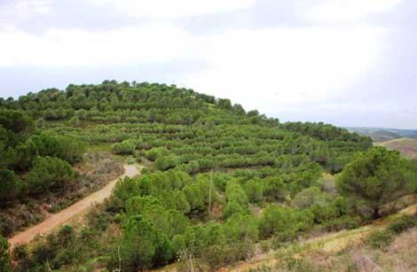 Floresta em Alcoutim