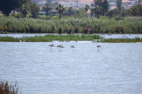 Lagoa-dos-Salgados