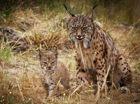 Life-Lince-Abutre