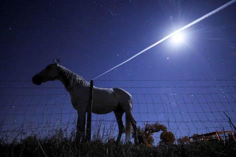 Miguel Claro - Cavalo Branco ao Luar