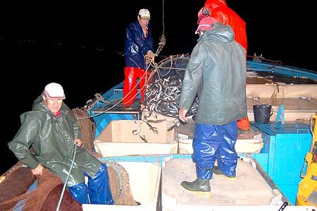 Pesca da sardinha1