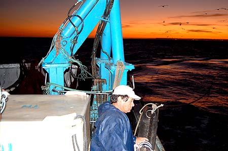 Pesca da sardinha2