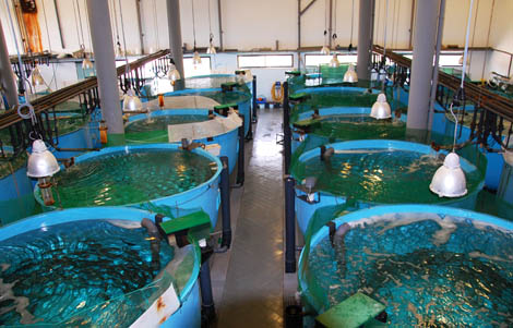 Aquacultura